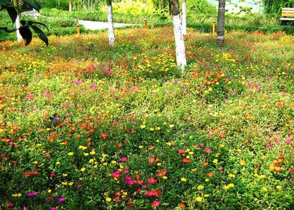 Мавританский газон (фото): плюсы, выбор растений, высадка своими руками