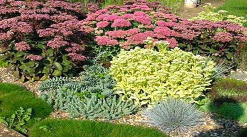 Почвопокровные растения для сада (фото, названия и описания)