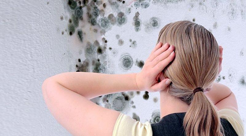 Как избавиться от плесени в квартире: причины и способы удаления