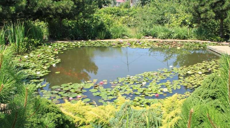 Как очистить пруд от ила: способы чистки, правила ухода